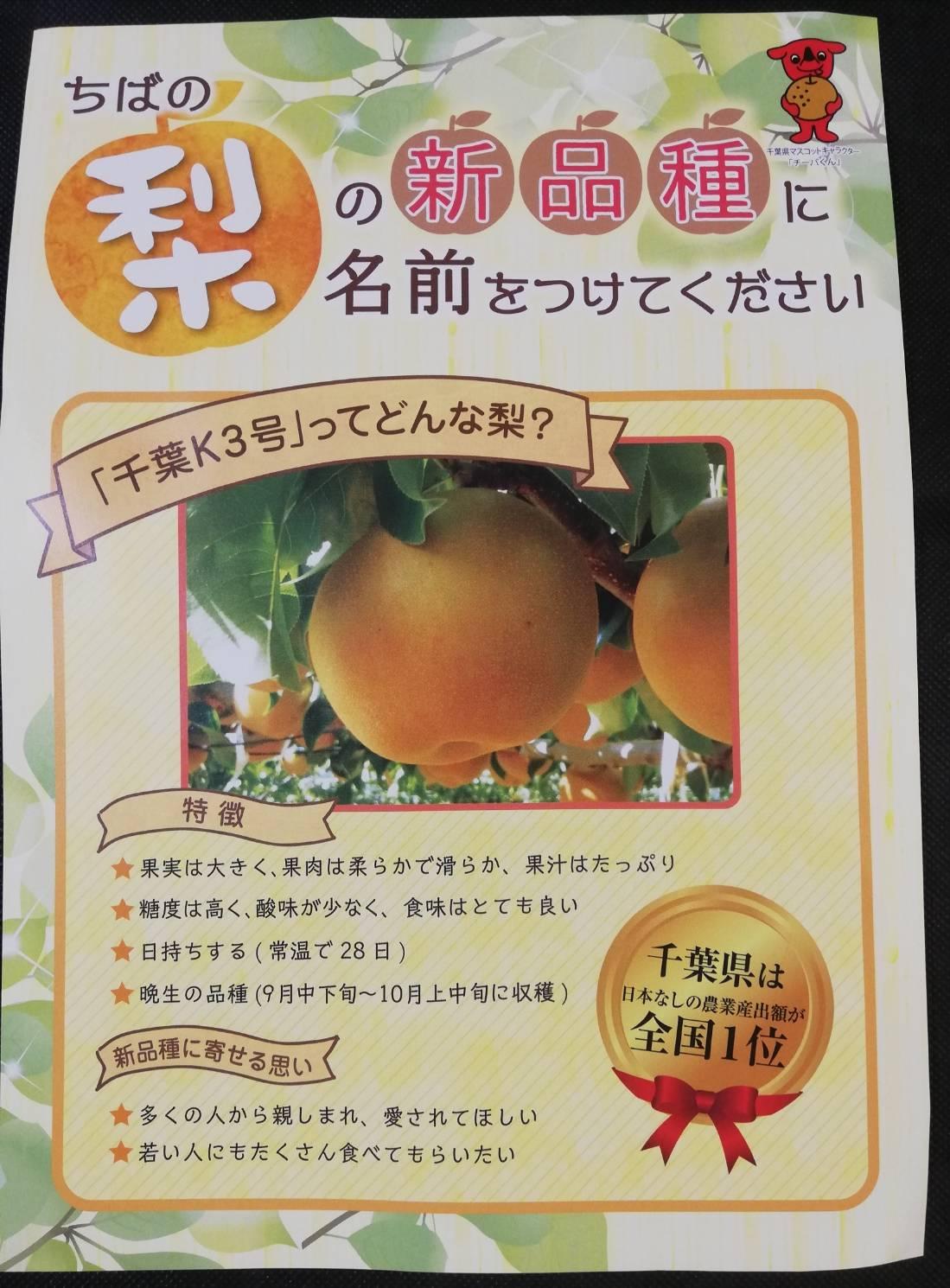 梨新品種千葉
