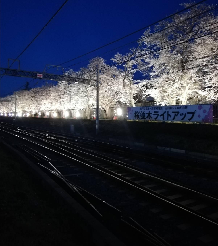 くぬぎ山元山夜桜ライトアップ2020