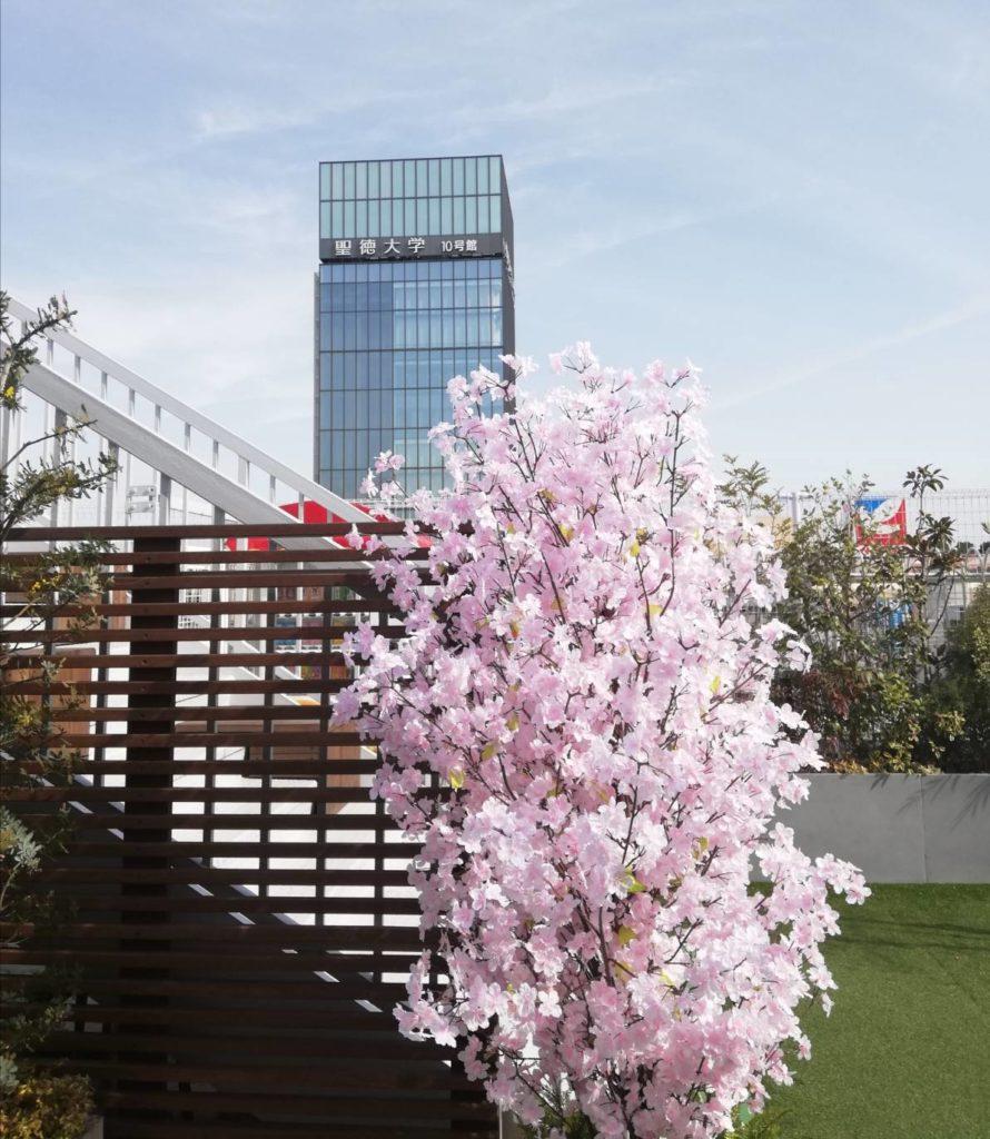 アトレ松戸8階屋上ガーデンテラス桜