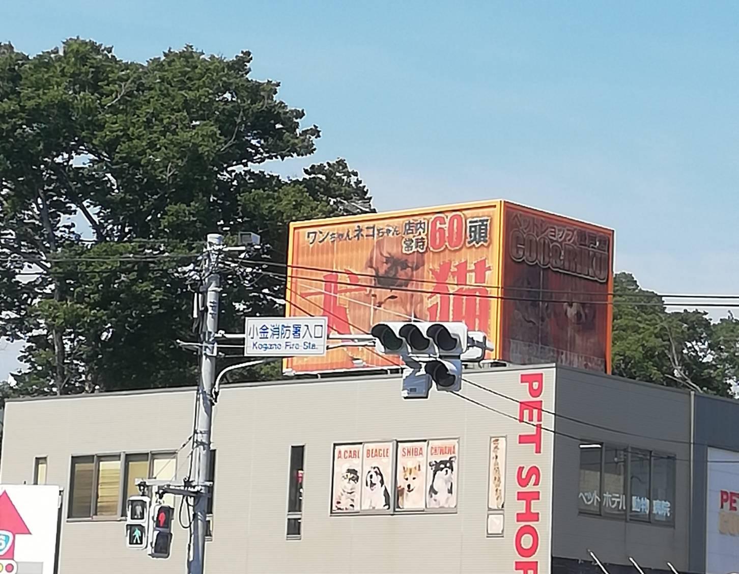 テラスモール松戸渋滞道路
